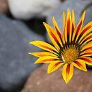 Bright and beautiful by Esperanza Gallego