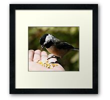 Black-Capped Chickadee (2010 Calendar Jun) Framed Print