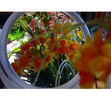 Mirror Image Photographic Print