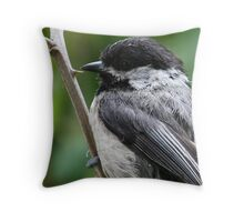 Portrait of a Black-Capped Chickadee Throw Pillow