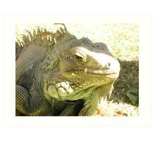 Iguana Mama Art Print
