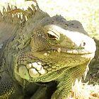 Iguana Mama by SplatterPics
