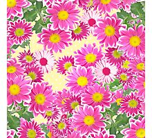 Pink white daisies floral polka dots pattern Photographic Print