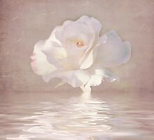 Pastel Pink Rose by Elaine Teague