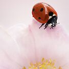 On top of her world by Mandy Disher