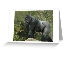 West Lowland Silverback Gorilla Greeting Card