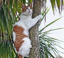 Keeping A Lookout by Susie Peek