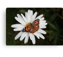 Pudge and Daisy Canvas Print