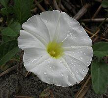 Damp Flower by SplatterPics