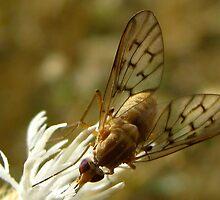 Flower Fly by Sherry Lynn Crawford