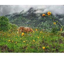 Foggy Alpine Pasture  Photographic Print