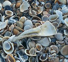 Seashells, Seashells! by Caren Grant