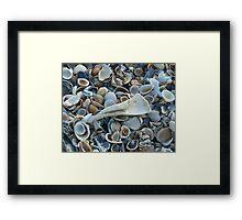 Seashells, Seashells! Framed Print