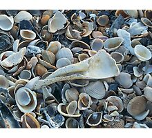 Seashells, Seashells! Photographic Print