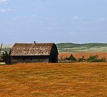 barn on the prairie by Lynne Prestebak