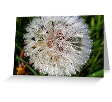 Dew Soaked Dandelion Greeting Card