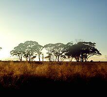 Wheatbelt Dawn by LouJay