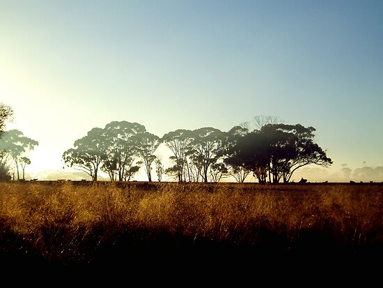 Wheatbelt Dawn by LouJay