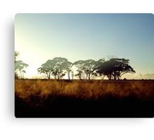 Wheatbelt Dawn Canvas Print
