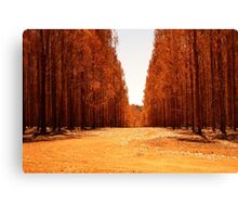 Flamed Trees Canvas Print