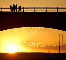 Bat Sunset by Jennifer Suttle