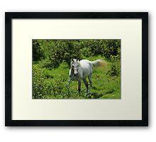 Horse on a Farm Framed Print