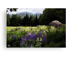 Lupine in the Shadow of Cannon Canvas Print
