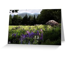 Lupine in the Shadow of Cannon Greeting Card