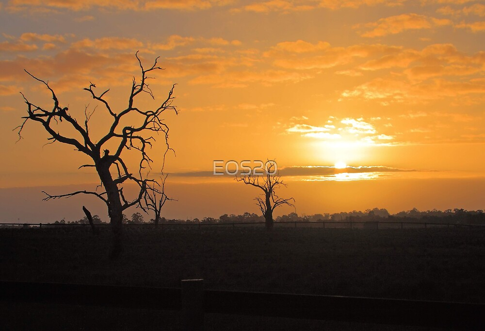 Farm Trees At Sunset  by EOS20