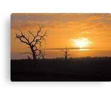 Farm Trees At Sunset  Canvas Print