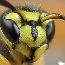 Yellow Jackets Face by Heavenandus777