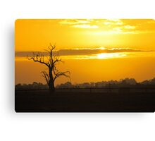 Farm Tree At Sunset  Canvas Print
