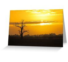 Farm Tree At Sunset  Greeting Card