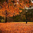 Beautiful Bright in Autumn by Elana Bailey