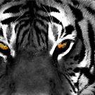 Tiger Eyes I by Jon  Johnson