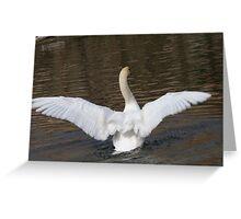 swan on lake Greeting Card