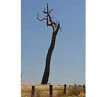 Fencepost tree Photographic Print