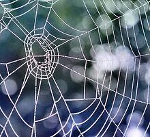The web by Sheri Nye