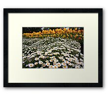 Mattress of Daisies and a Pillow of Tulips Framed Print