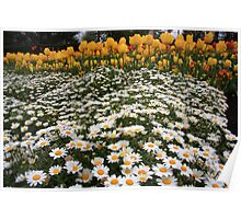 Mattress of Daisies and a Pillow of Tulips Poster
