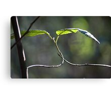 Once Entwined Canvas Print