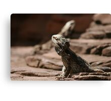 Baking Beardies Canvas Print