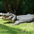 Happy Gator by ahobbs77