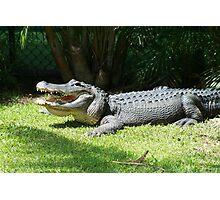 Happy Gator Photographic Print