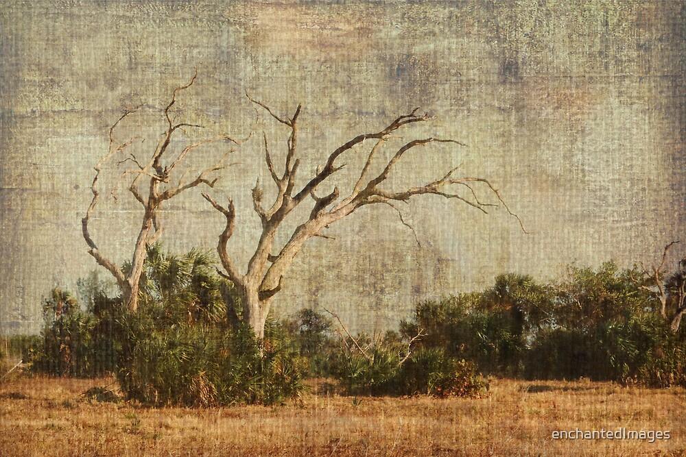 Vulture Trees by enchantedImages