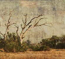 Vulture Trees by enchantedImages