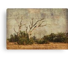 Vulture Trees Canvas Print
