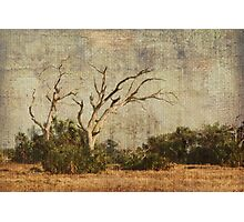 Vulture Trees Photographic Print