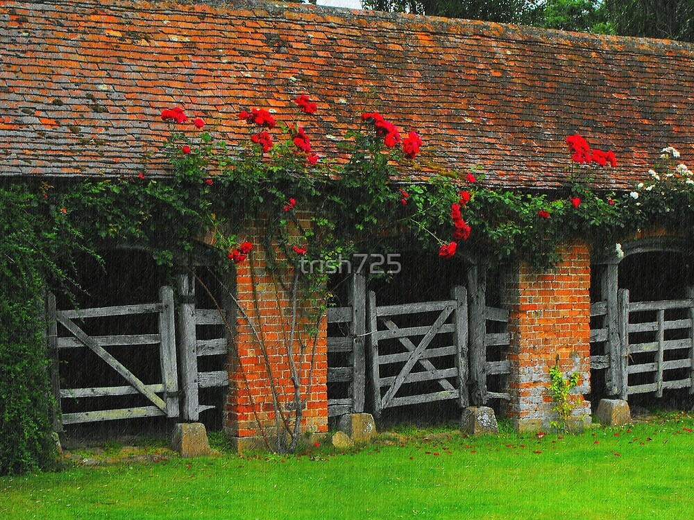 Roses Above the Stables by trish725