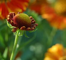 The colors of late summer by Denise Couturier